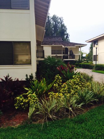 Saddlebrook Resort Tampa: Cluster 1