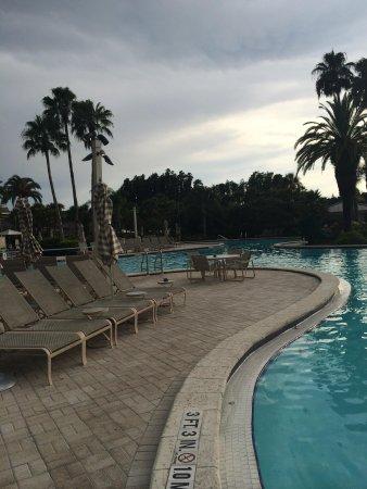 Saddlebrook Resort Tampa: Pool