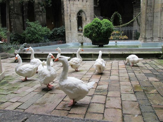 Barcelona Cathedral: Geese in the garden