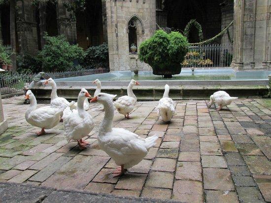 Catedral de Barcelona: Geese in the garden