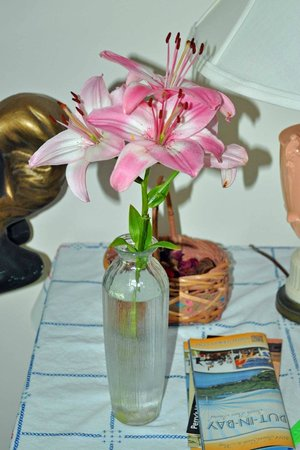 Ashley's Island House: Our Asiatic Lilies
