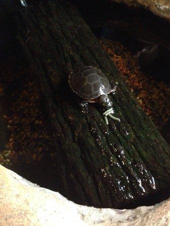 Upper Peninsula Children's Museum : New baby turtle
