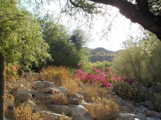 Loews Ventana Canyon Resort: surounding area