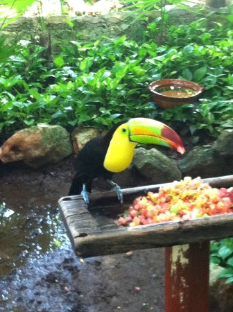 Iberostar Tucan Hotel: Exotic bird sanctuary