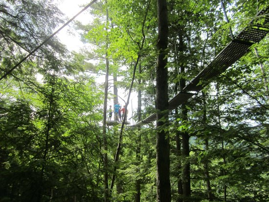 Alpine Adventures Outdoor Recreation : This is one of the tree top jumps
