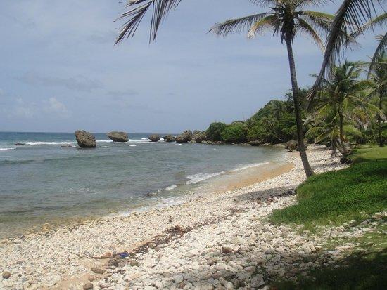 Island Inn Hotel: Views from the island tour