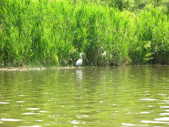 Grand River Rafting Company : Blue heron eating fish
