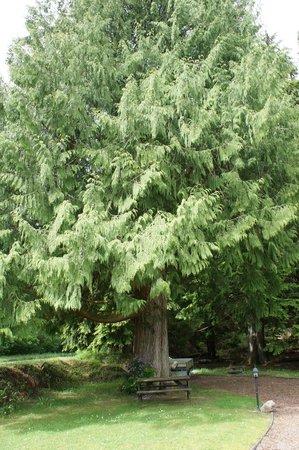 Glen Albyn Lodge Invergarry Bed and Breakfast: De bijzondere boom in de tuin