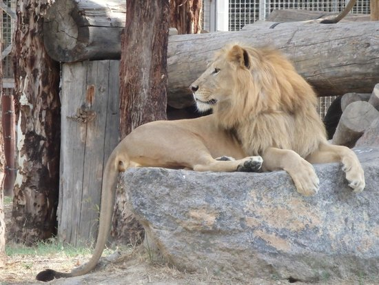 Izmir Wild Life Park: King of the zoo, of course