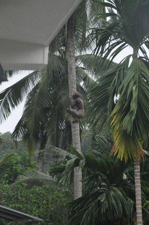 Unawatuna Nor Lanka Hotel : Вид из номера