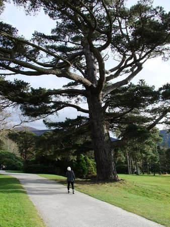 Muckross House, Gardens & Traditional Farms: Stunning