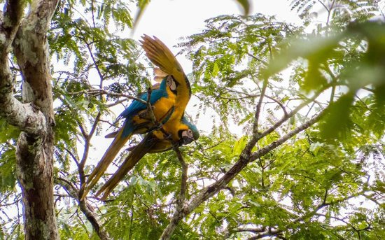Amazonia Expeditions' Tahuayo Lodge: Macaws