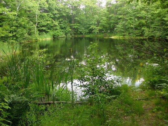 Auberge La Montagne Coupee: Petit lac près de l'hôtel