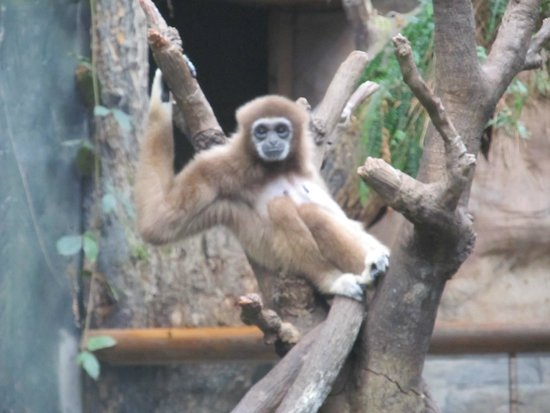 Henry Doorly Zoo: monkey