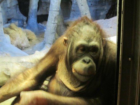 Henry Doorly Zoo: tang