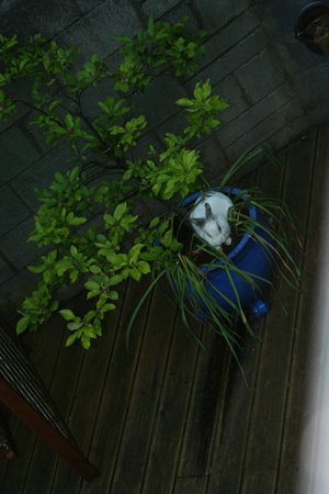 Rathview House: The rabbit.