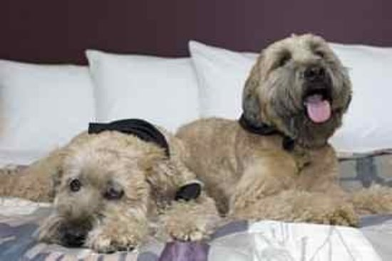 Carlton Inn Midway: Pet Friendly: Dogs in Chicago Hotel