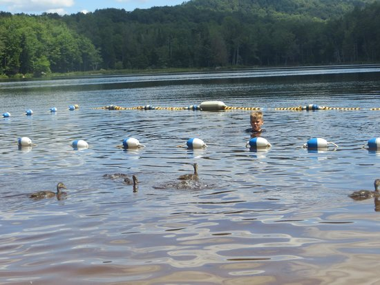 Old Forge Camping Resort: The resort beach/swimming area.  My son swimmng with the ducks