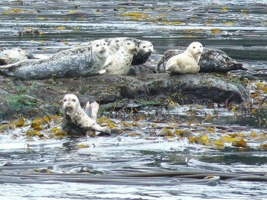 Wild Whales Vancouver: Harbour Seals