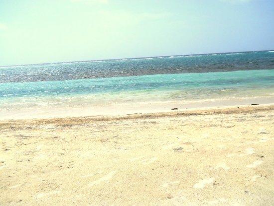 Blackbird Caye Resort : Beach