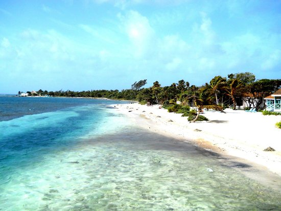 Blackbird Caye Resort : Property View