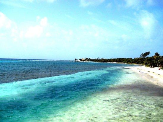Blackbird Caye Resort : Ocean View