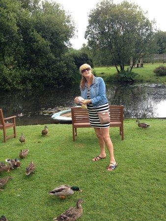 Damson Dene Hotel: Duck feeding