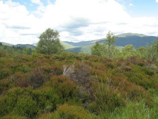 Gray Line Scotland: The Trossachs