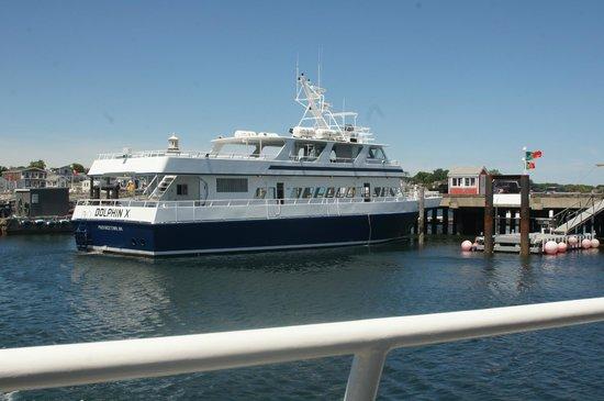 Dolphin Fleet Whale Watch: Boat