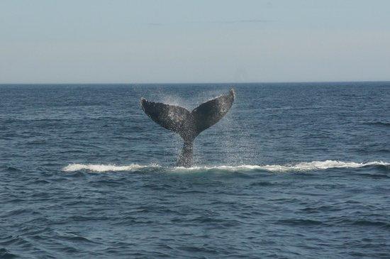 Dolphin Fleet Whale Watch: Dolpin Fleet