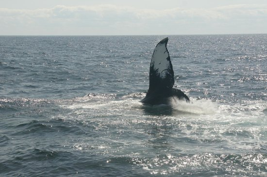 Dolphin Fleet Whale Watch: Whale tour