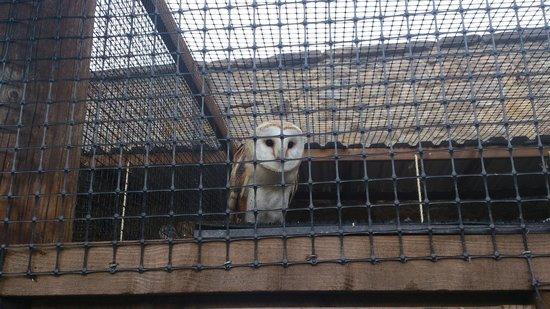 Walworth Castle Birds of Prey: Walworth 5