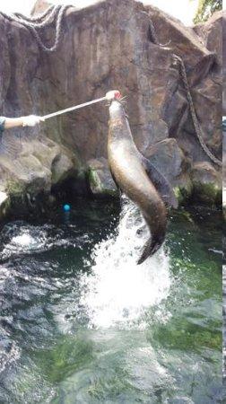 Bristol Zoo Gardens: Seal Training
