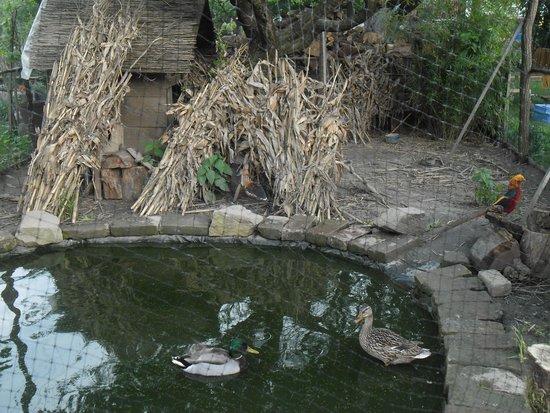 Seosko Gospodarstvo Lackovic: A small pond