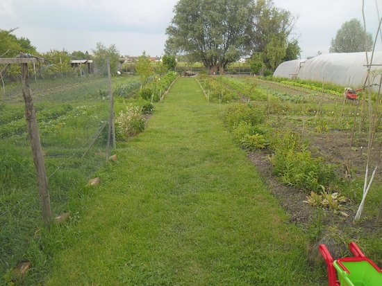 Seosko Gospodarstvo Lackovic: A garden