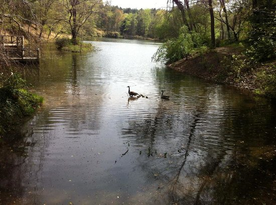 Biltmore Estate: Lake in the Biltmore Gardens