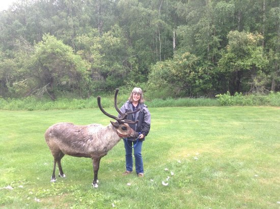 Running Reindeer Ranch : Picture with one of the reindeer