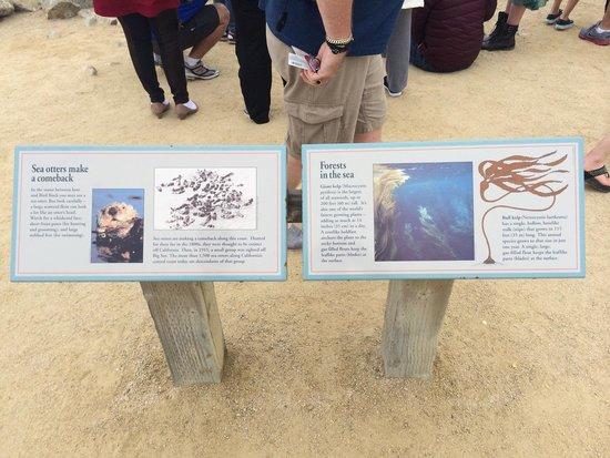 17-Mile Drive : Sea Otter