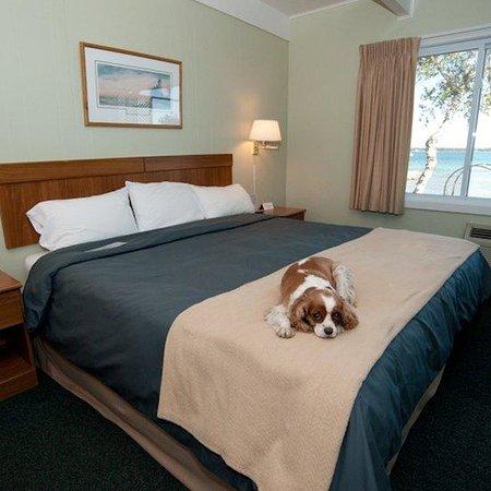Beachfront Inn: Room 105 - dog friendly