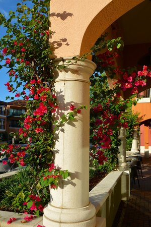 Naples Bay Resort : Stunning flowers and plants add to the beauty of this resort