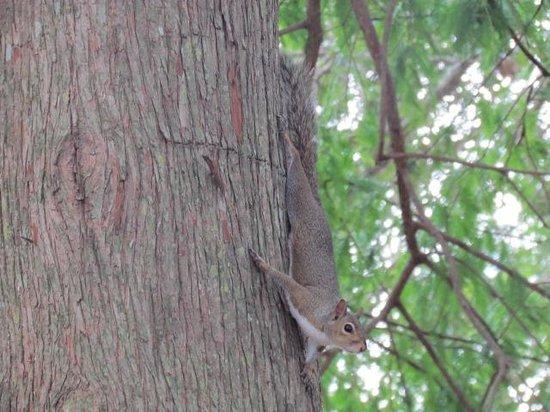 Quality Suites Lake Buena Vista: Este esquilinho lindo corria de um lado pro outro no jardin do hotel!