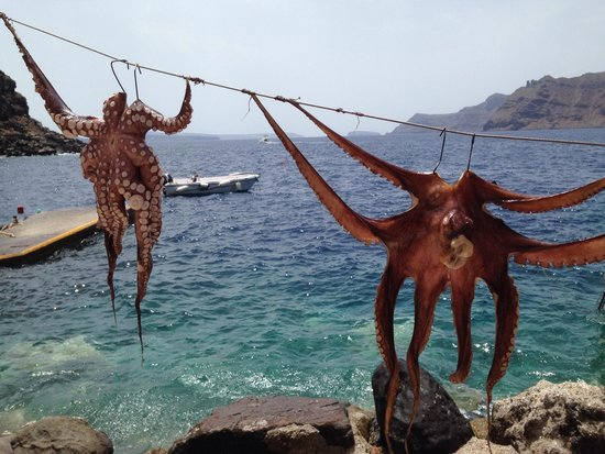 Amoudi Bay: Octopus in the sun