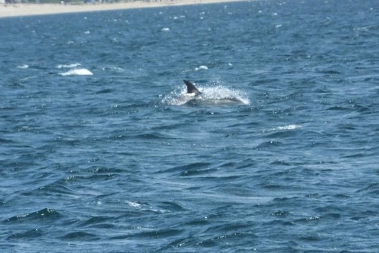 Marine Discovery: Another dolphin