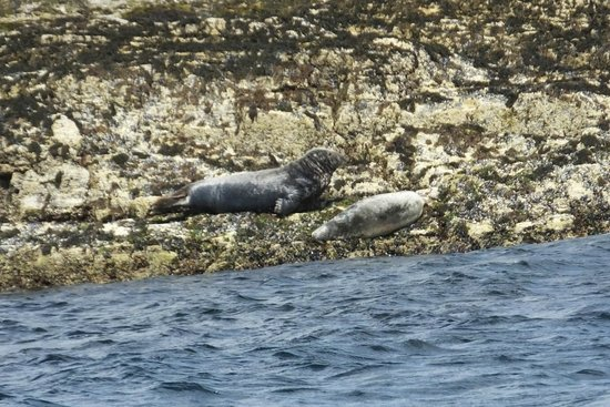 Marine Discovery: Basking seals