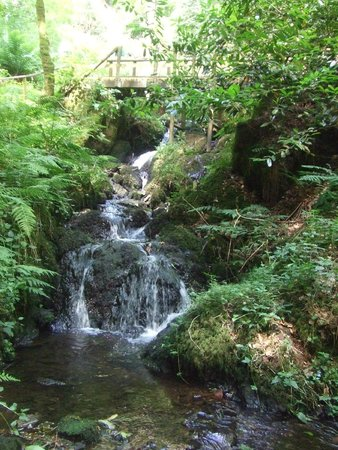 Canonteign Waterfalls and Country Park: Walking up through the woods