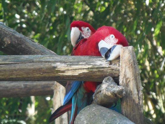 Zoo La Boissière du Doré: Les péroquets