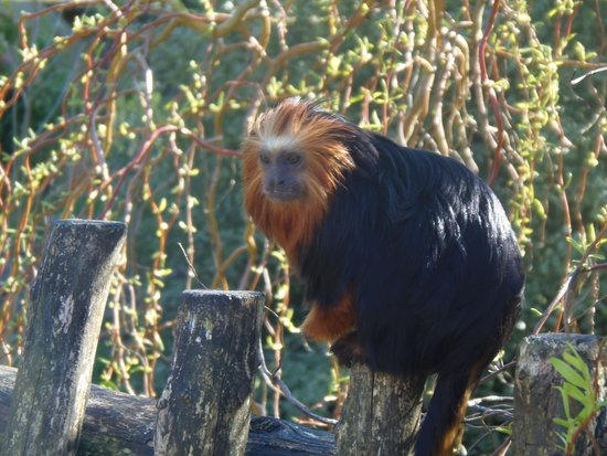 Zoo La Boissiere du Dore : les singes