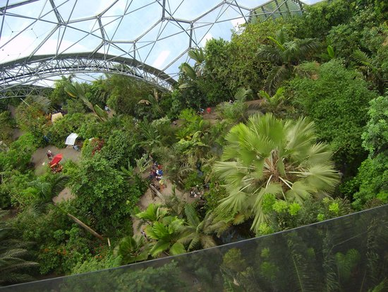 Eden Project: View from the top of the Ranforest Biome