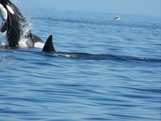 Wild Whales Vancouver: No. 2