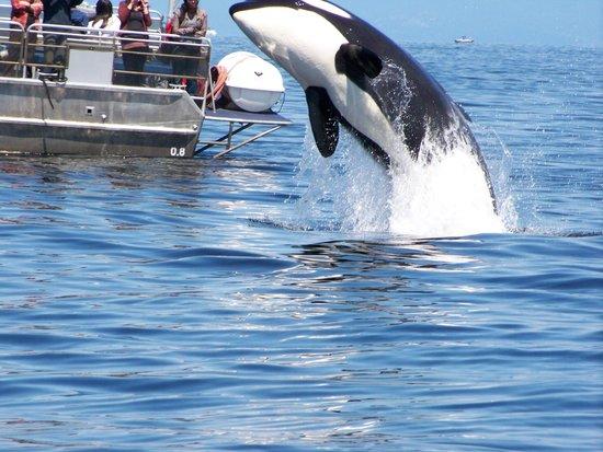 Wild Whales Vancouver: No. 3